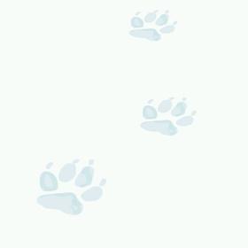 L'enquête du bonhomme de neige